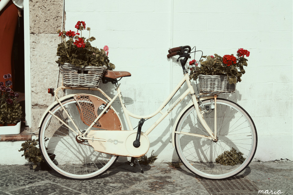 bicycle vases vintage #photography #vintage #bicycle #streetphotografy #myinspiration #lifestyle