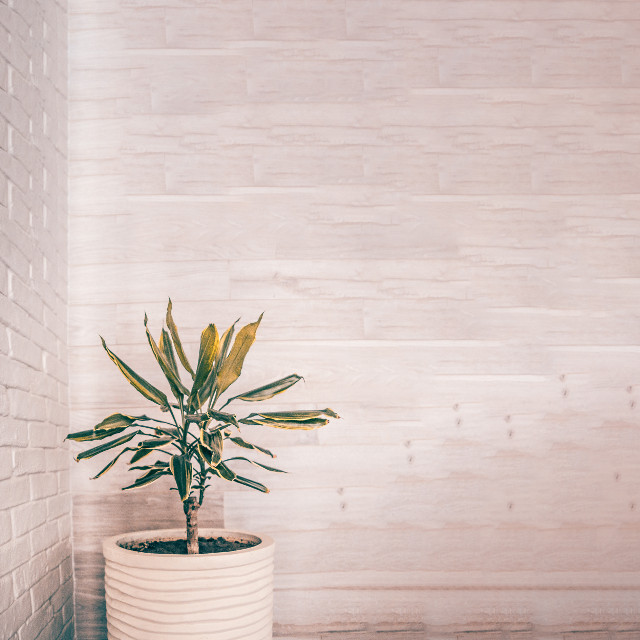 #freetoedit #wall #white #texture #room #plant