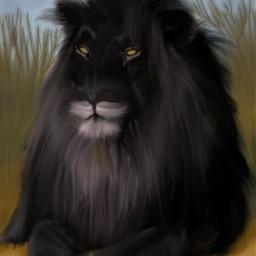 wdpzooanimals black lion