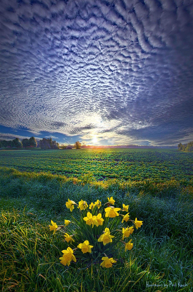 """"""" Springing to Life """" - Wisconsin Horizons by Phil Koch.   #colorful #nature #photography #flower #love #hdr #spring #canon #country #rural #peace #mood #sunrise #outdoors #green #park #weather #inspiration #Clouds #Light #goodmorning"""