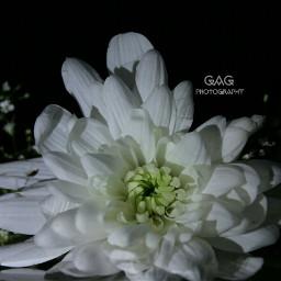 photography flower love