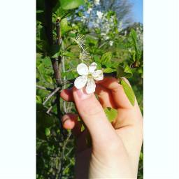 spring flower hand green white