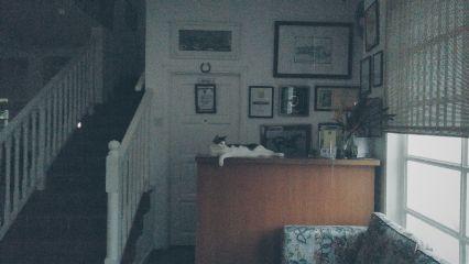 cat evening dark horse lovetheplace
