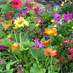 garden colorful flowers