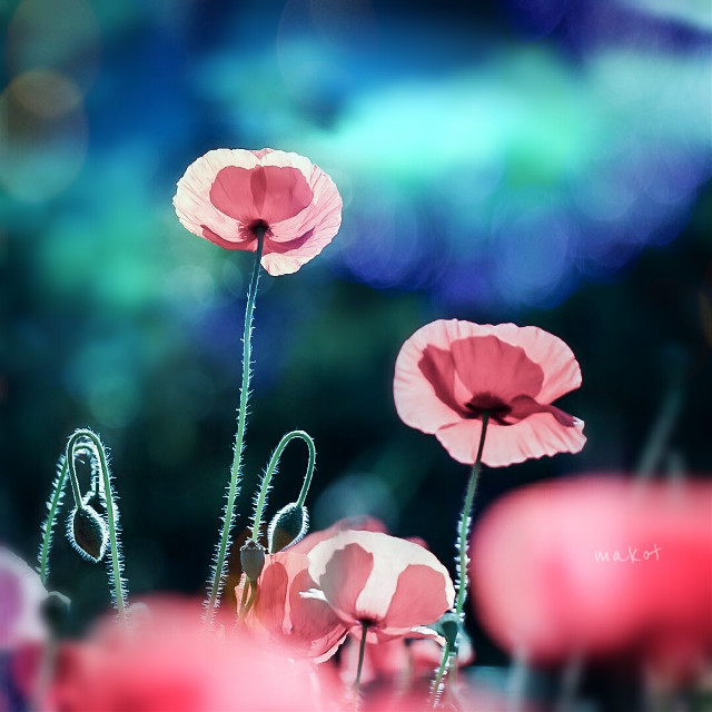 #FreeToEdit  #colorful  #flower #photography #spring #bokeh