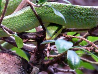 photography petsandanimals snake nature green