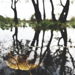photography leaves fall beauty rain