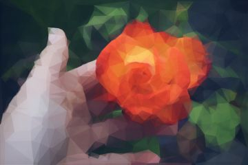 polygon paphotochallenge feature rose flower freetoedit