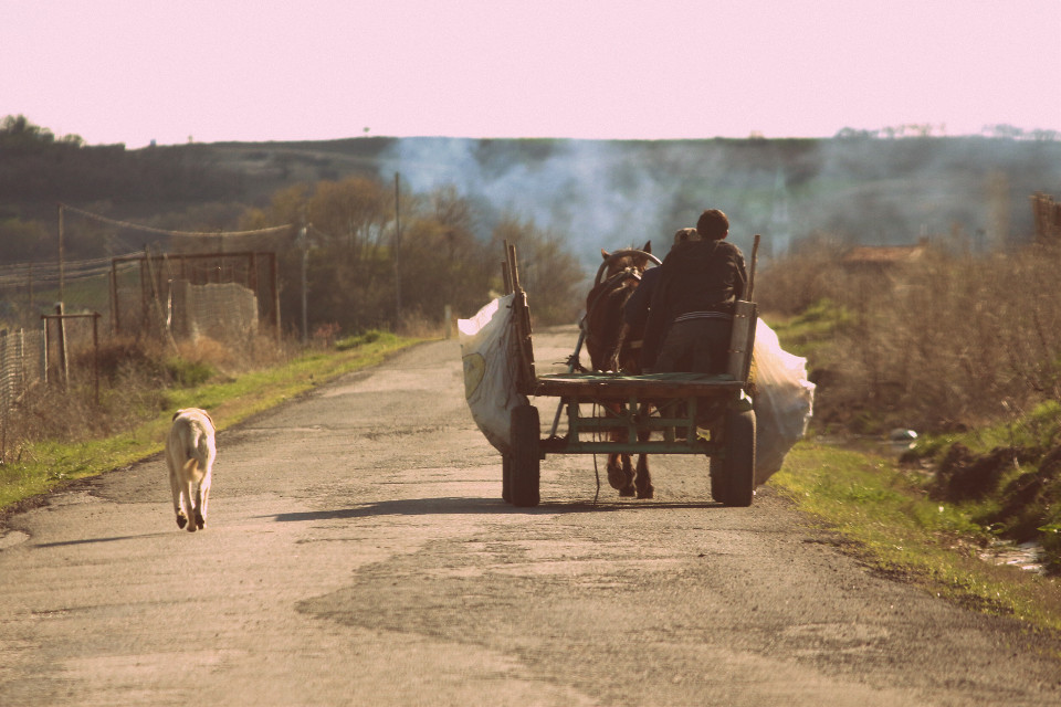 #job #dog #carriage     #poverty