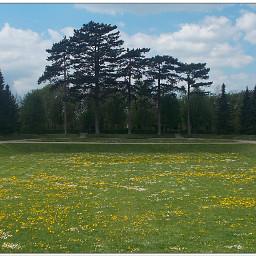 park publicgarden trees pinetrees daisies