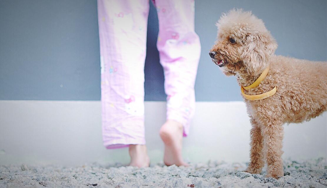 #photography #doglover #picoftheday #nikon #pets&animals