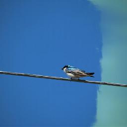 birds swallow mask