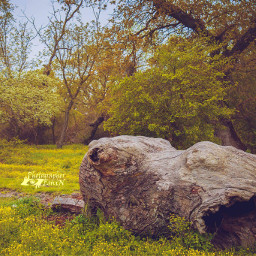 freetoedit colorful nature photography spring