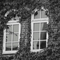photography windows blackandwhite