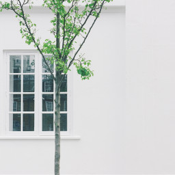 freetoedit wall white tree green