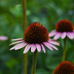 flowers art nature outdoor photography freetoedit