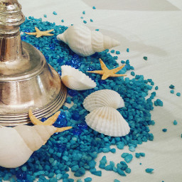 summer shell seastar wppwhite