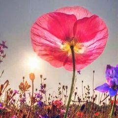 flowers sunrise sky dodgereffect goodmorningworld