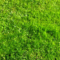 freetoedit grass greengrass